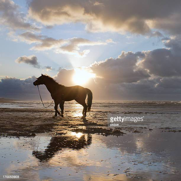 Pferd zu Fuß am Strand in moody sky