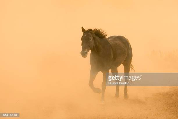 horse walking through dust trail from others