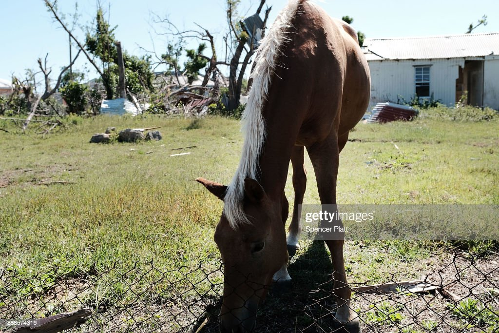 A horse walks among abandoned homes on the nearly destroyed island of Barbuda on December 8, 2017 in Cordington, Barbuda. Barbuda, which covers only 62 square miles, was nearly leveled when Hurricane Irma made landfall with 185mph winds on the night of September six. Only two days later, fearing Barbuda would be hit again by Hurricane Jose, the prime minister ordered an evacuation of all 1,800 residents of the island. Most are now still in shelters scattered around Barbuda's much larger sister island Antigua.