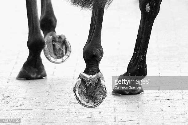 A horse walks around the parade ring prior to a race on Victoria Derby Day at Flemington Racecourse on November 1 2014 in Melbourne Australia