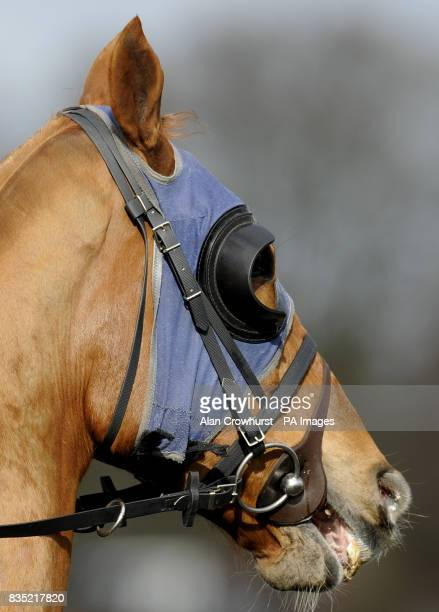 A horse wears blinkers at Lingfield Park Racecourse Surrey