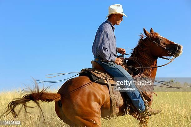 Cavalo Whisperer