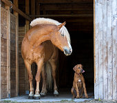 Horse and a rhodesian ridgeback puppy posing together.