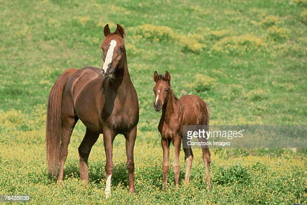 Horse with offspring in pasture