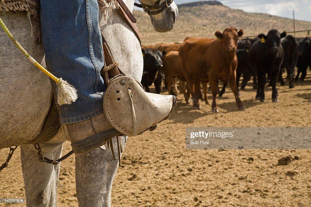 Horseback cowboy, boot and tapadera, Oregon : Stock Photo