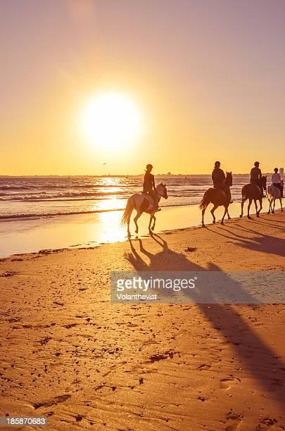Horseback riders along beach at sunset. Shadows