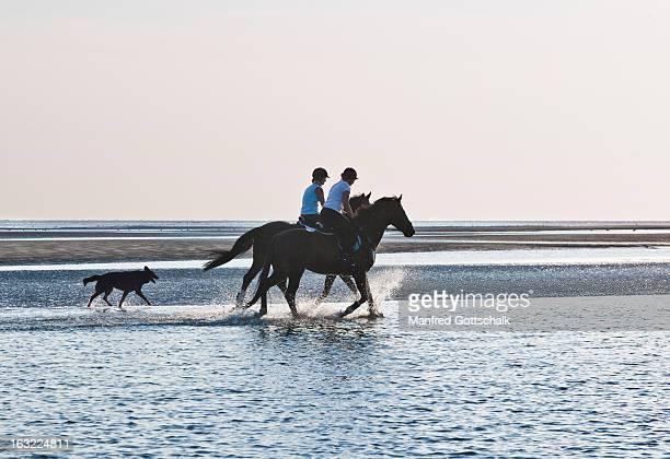 Horseback riding in the Wadden Sea