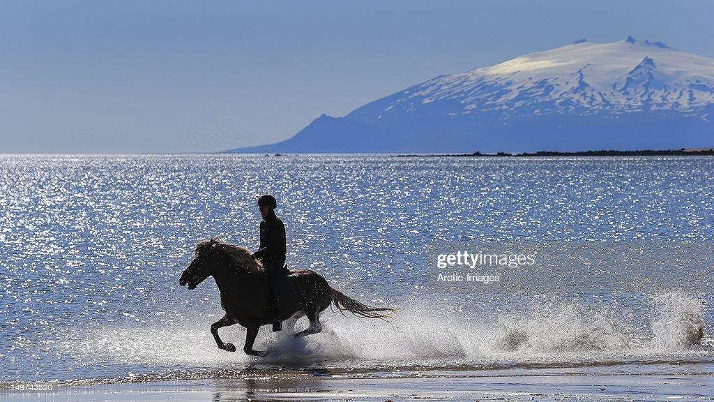 Horseback riding on the beach : Stock Photo