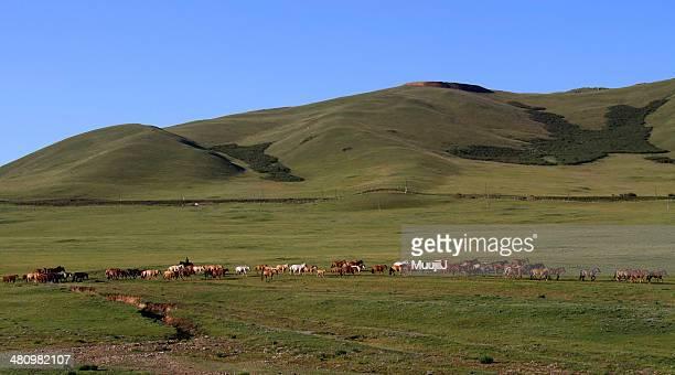 Horse-breeder in Mongolia
