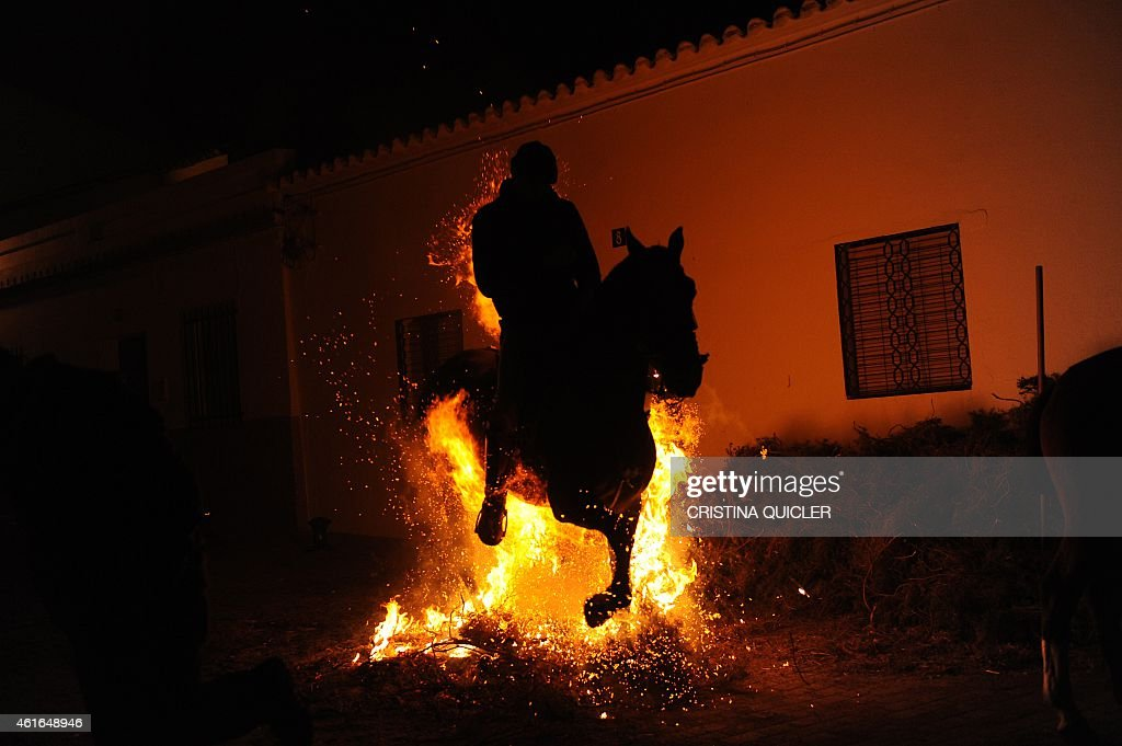A horseman jumps over a bonfire during the celebrations of the traditional religious festival 'Luminarias' in honour of San Antonio Abad -- patron saint of animals -- in Alosno, Huelva, Spain, on January 16, 2015.