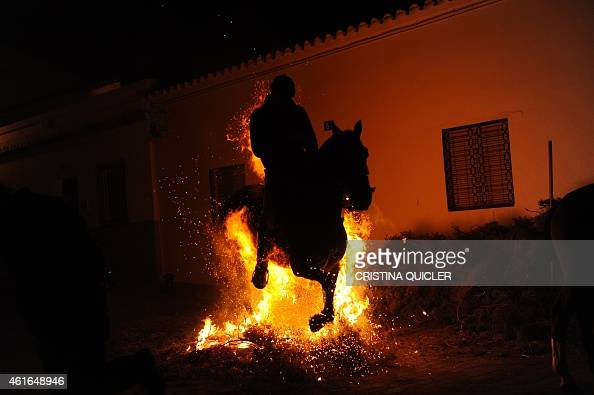 A horseman jumps over a bonfire during the celebrations of the traditional religious festival 'Luminarias' in honour of San Antonio Abad patron saint...