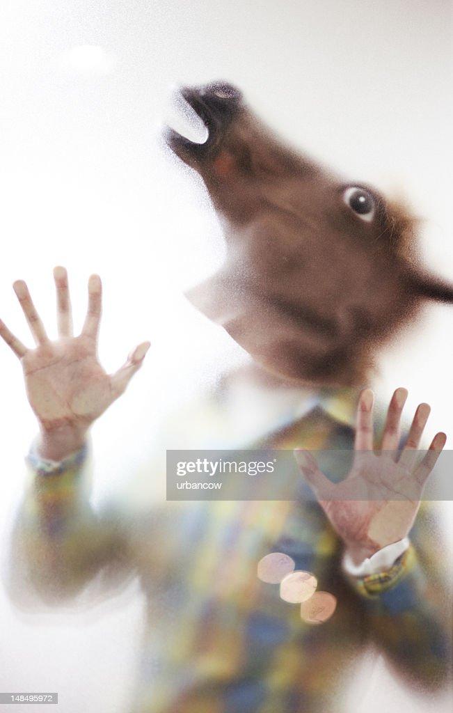 Horseman : Stock Photo