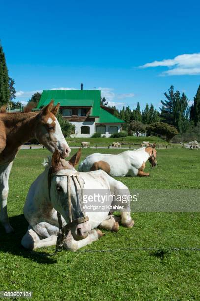 Horses and a foal at the Estancia Hotel Kau Yatun in El Calafate Argentina