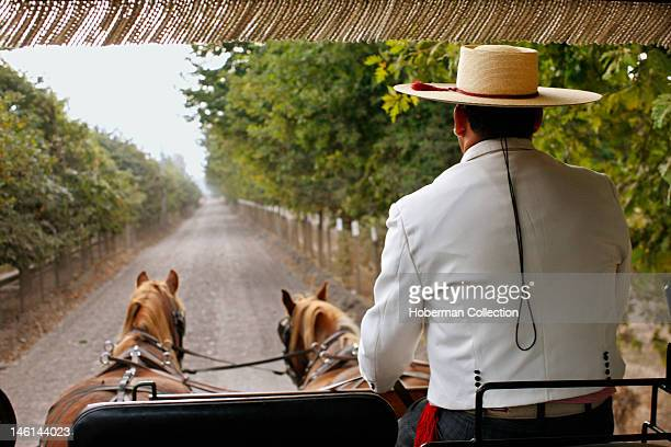 Horses and Carriage Chile