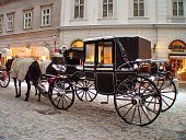Horses and carriage in Vienna