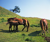 Horses and foal standing in a field