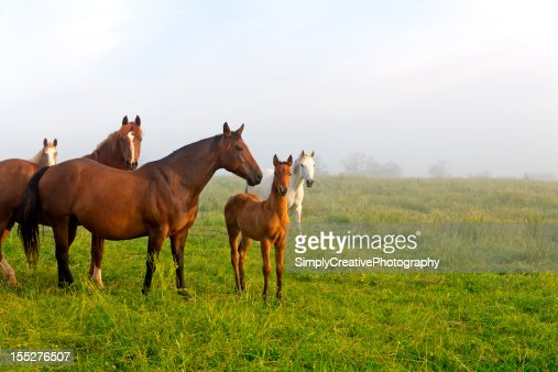 Horses and Foals in Spring Pasture
