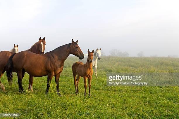 Pferde Weiden im Frühjahr und foam hand