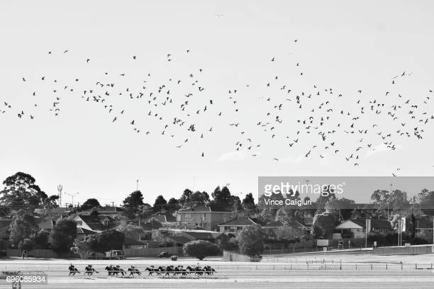 Horses and riders make their way around the back straight as a flock of seagulls fly above in Race 4 during Melbourne Racing at Sandown Hillside on...