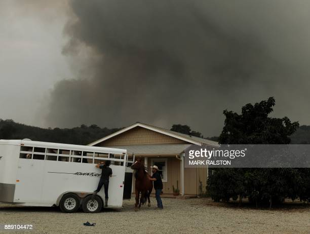 Horses are evacuated from the Laughing Dog Ranch as fire and smoke heads towards the area from the Thomas wildfire in Ojai California on December 9...