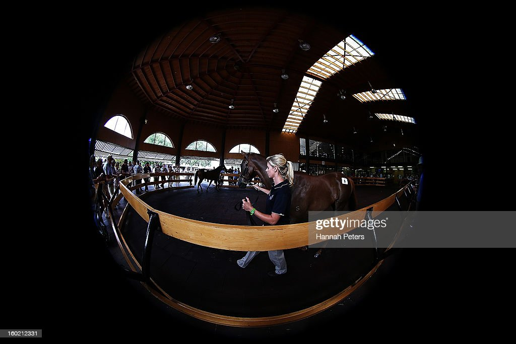 Horses are paraded to potential buys before the New Zealand Bloodstock 87th National Yearling Sales at Karaka on January 28, 2013 in Auckland, New Zealand.