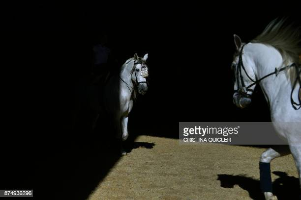 Horses are pictured before an exhibition at the Sicab 2017 International Horse fair in Sevilla on November 16 2017 / AFP PHOTO / CRISTINA QUICLER