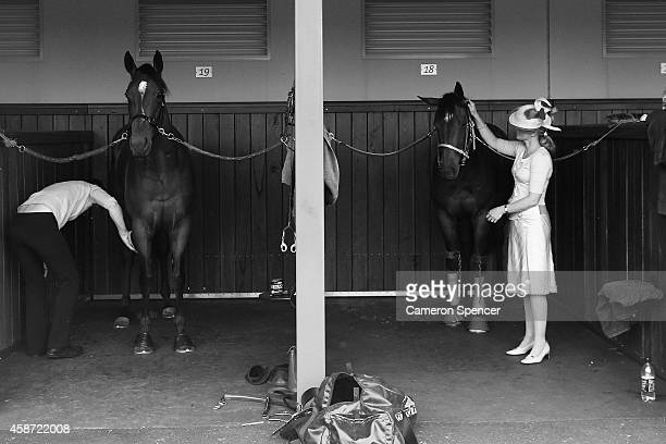 Horses are prepared in the birdcage on Melbourne Cup Day at Flemington Racecourse on November 4 2014 in Melbourne Australia