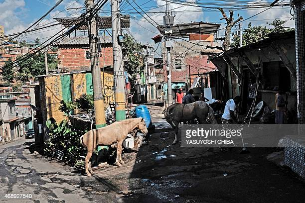 Horses are seen at a shantytown of the Alemao complex in Rio de Janeiro Brazil on April 8 2015 Fresh violence in Rio's slums has led to growing...
