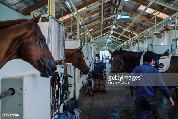 Horses are seen in the horse stable in the country club on June 10 2017 in Hong Kong Hong Kong Hong Kong is marking 20 years since the territory was...