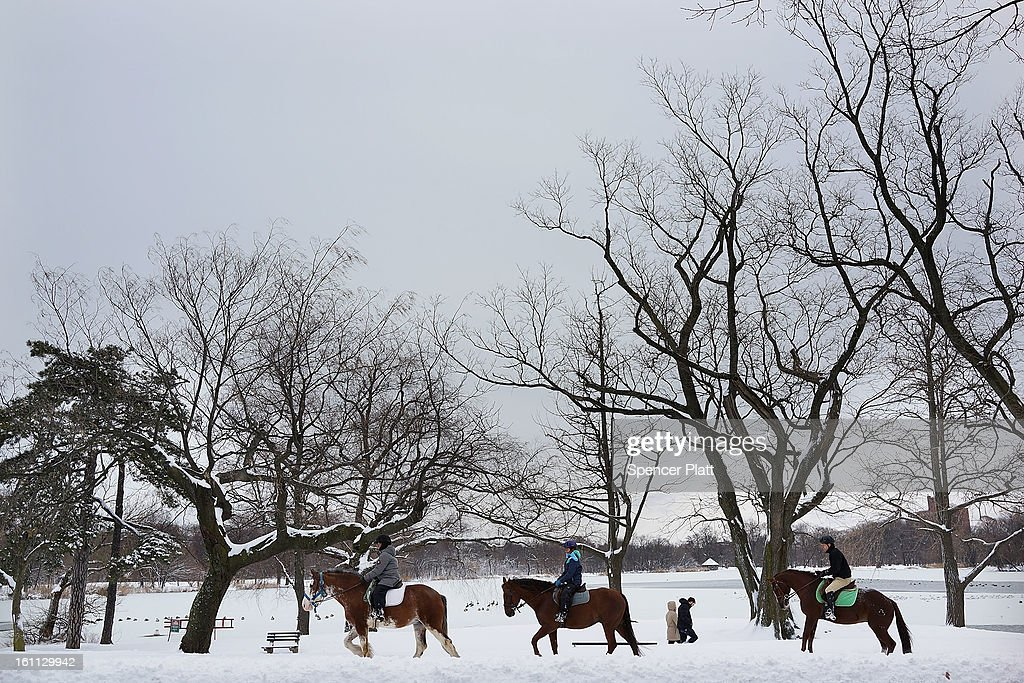Horses are viewed in Prospect Park in Brooklyn the morning after a massive snow storm on February 9, 2013 in New York City. New Yorkers woke up to over 10 inches of snow Saturday morning while parts of New England received over thirty inches following a storm that brought high winds and blizzard like conditions to the region.