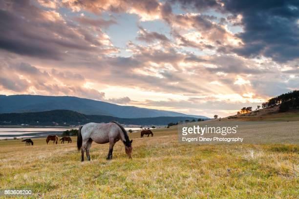 Rhodope Mountains, Bulgaria - October 2010: Horses around Batak lake