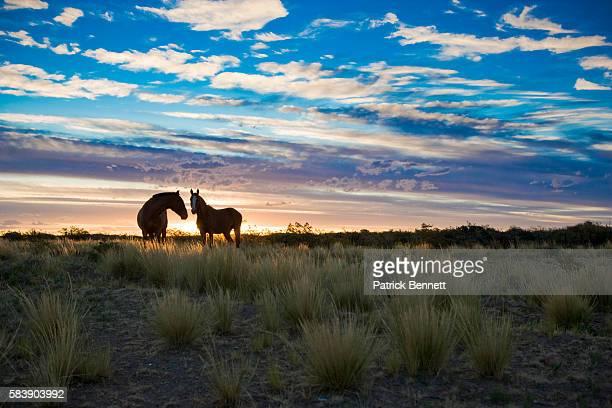 Horses at Estancia El Deseado in Patagonia