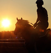 Horses at sunrise in training in stable area on July 23 2016 at Saratoga Race Course Saratoga Springs NY