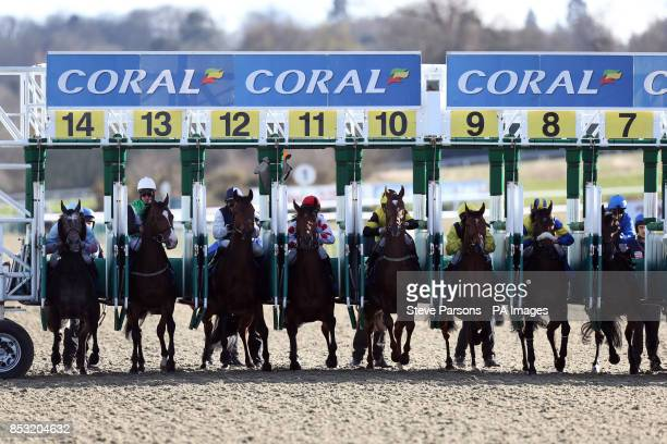 Horses at the start in the coralcouk Winter Derby during Winter Derby day at Lingfield Park Racecourse Surrey