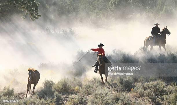 Chevaux Cowboys et Wranglers de travail