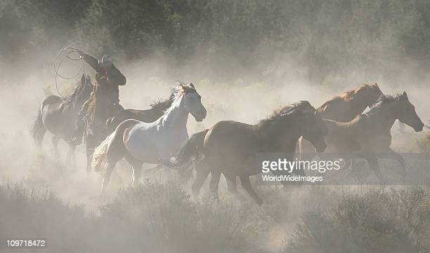 Horses Cowboys and Wranglers series 3