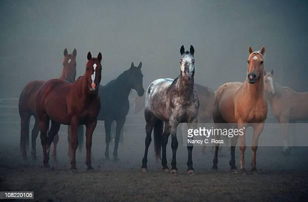 Cavalos, ouvidos virada para a frente, Animal, equitação, de manhã, ao ar livre, com nevoeiroweather forecast