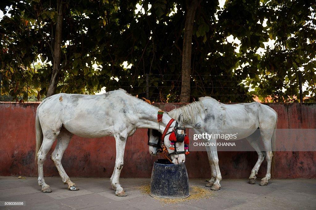 Horses eat their food on the roadside pavement in New Delhi on February 10, 2016. AFP PHOTO / Chandan KHANNA / AFP / Chandan Khanna