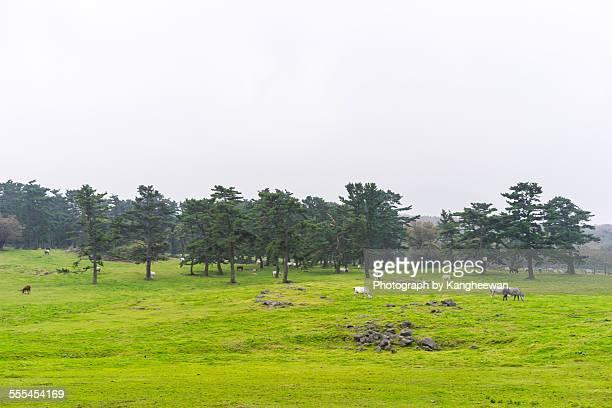 Horses farm, Jeju