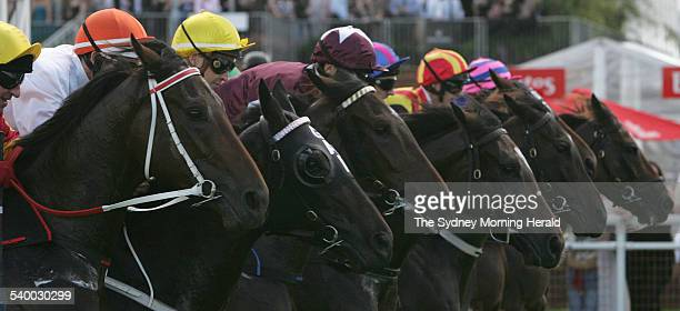 Horses foly out of the gates at the start of the Australian Oaks 2400 metre race at Royal Randwick The race was won by Glen Boss on Serenade Rose who...