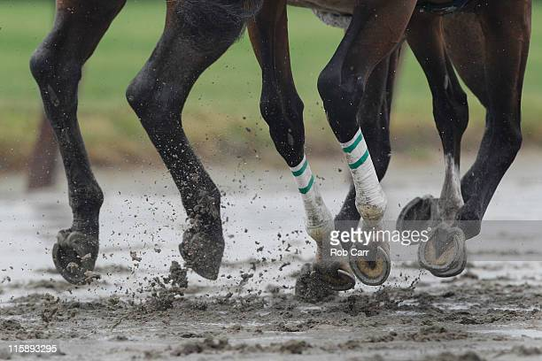 Horses go over the track during the ninth race prior to the 143rd running of the Belmont Stakes at Belmont Park on June 11 2011 in Elmont New York