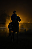 Horses go through their routine in foggy conditions during a Caulfield track work session at Caulfield Racecourse on August 26 2014 in Melbourne...
