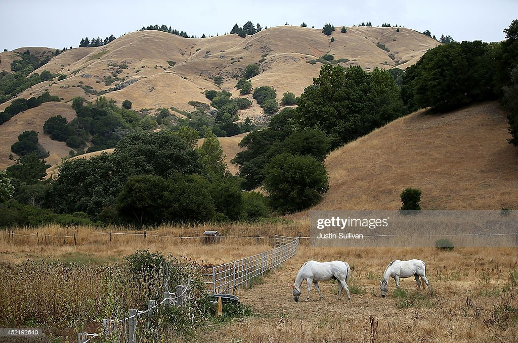 Horses graze in a field of dead grass on July 15, 2014 in Woodacre, California. As the severe drought in California contiues to worsen, the State's landscape and many resident's lawns are turning brown due to lack of rain and the discontinuation of watering.