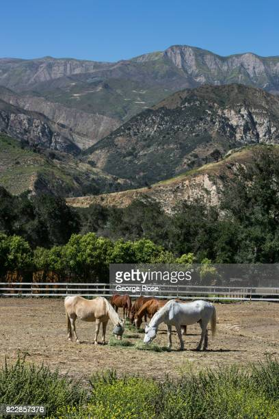 Horses graze in a pasture at Rancho Oso Resort in Santa Barbara County's backcountry on May 13 near Santa Ynez California Located 45 minutes north of...