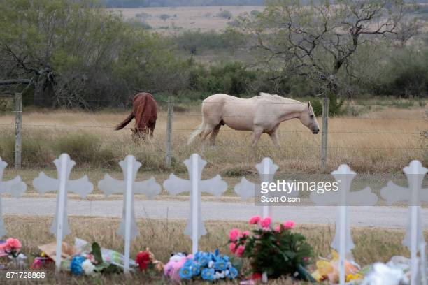 Horses graze in a pasture near a memorial where 26 crosses were placed to honor the 26 victims killed at the First Baptist Church of Sutherland...
