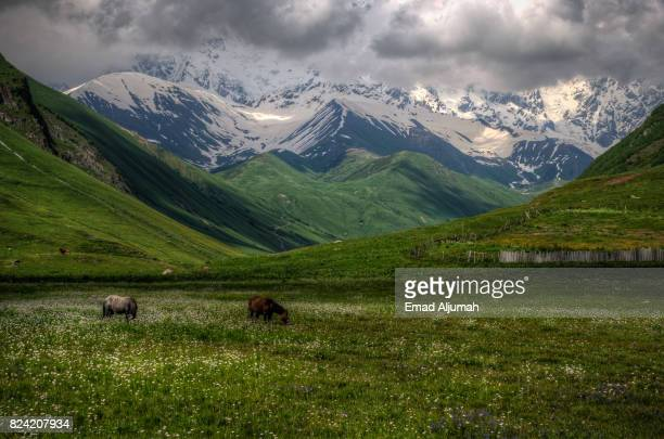 Horses grazing at the foothills of Shkhara mountain, Ushguli, Svaneti, Georgia - June 29, 2017