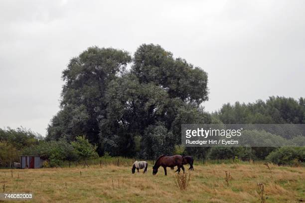 Horses Grazing By Trees On Field Against Clear Sky