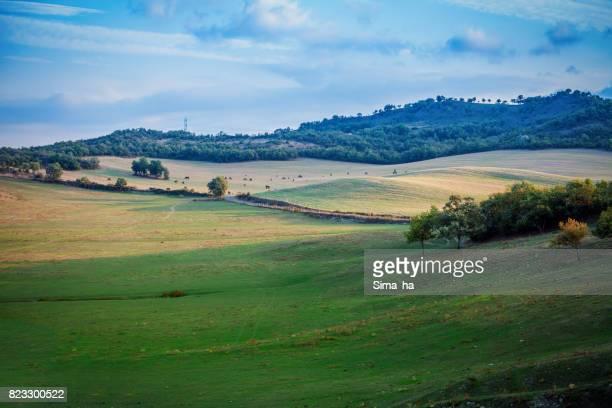Horses grazing in autumn pasture. Basque country. Spain