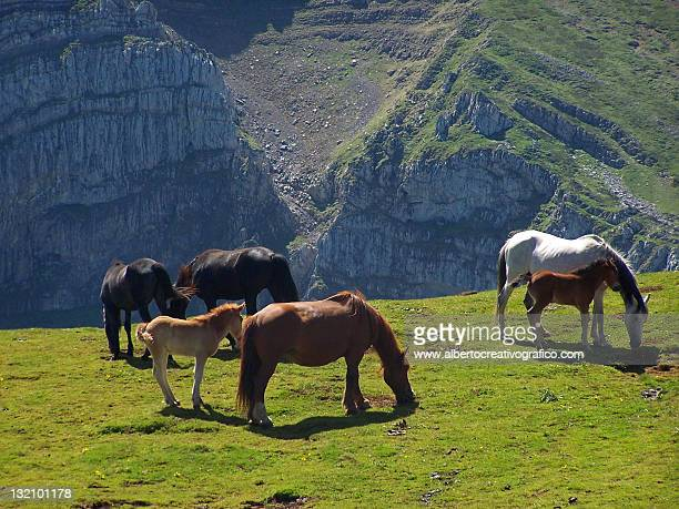 Horses grazing in high mountains