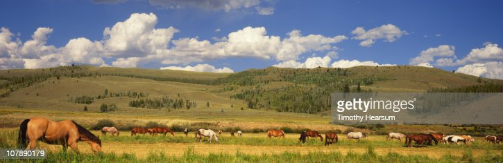 Horses grazing in pasture with hills beyond : Stock Photo